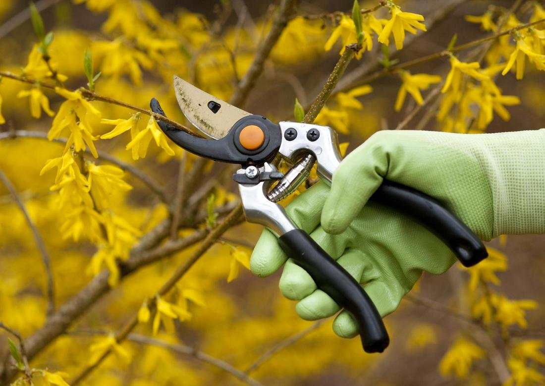 tree-removal-seattle-tree-pruning-2_orig